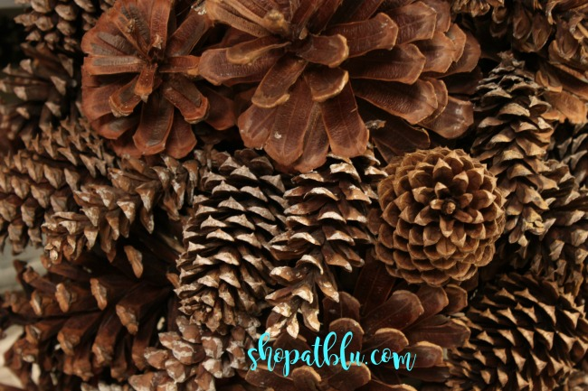 the-blue-building-shopatblu-pinescones-home-decor-four-types-of-pinecones